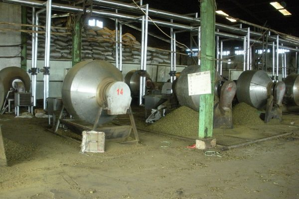 Heat Exchanger System in Tea Leaf Drying Plant